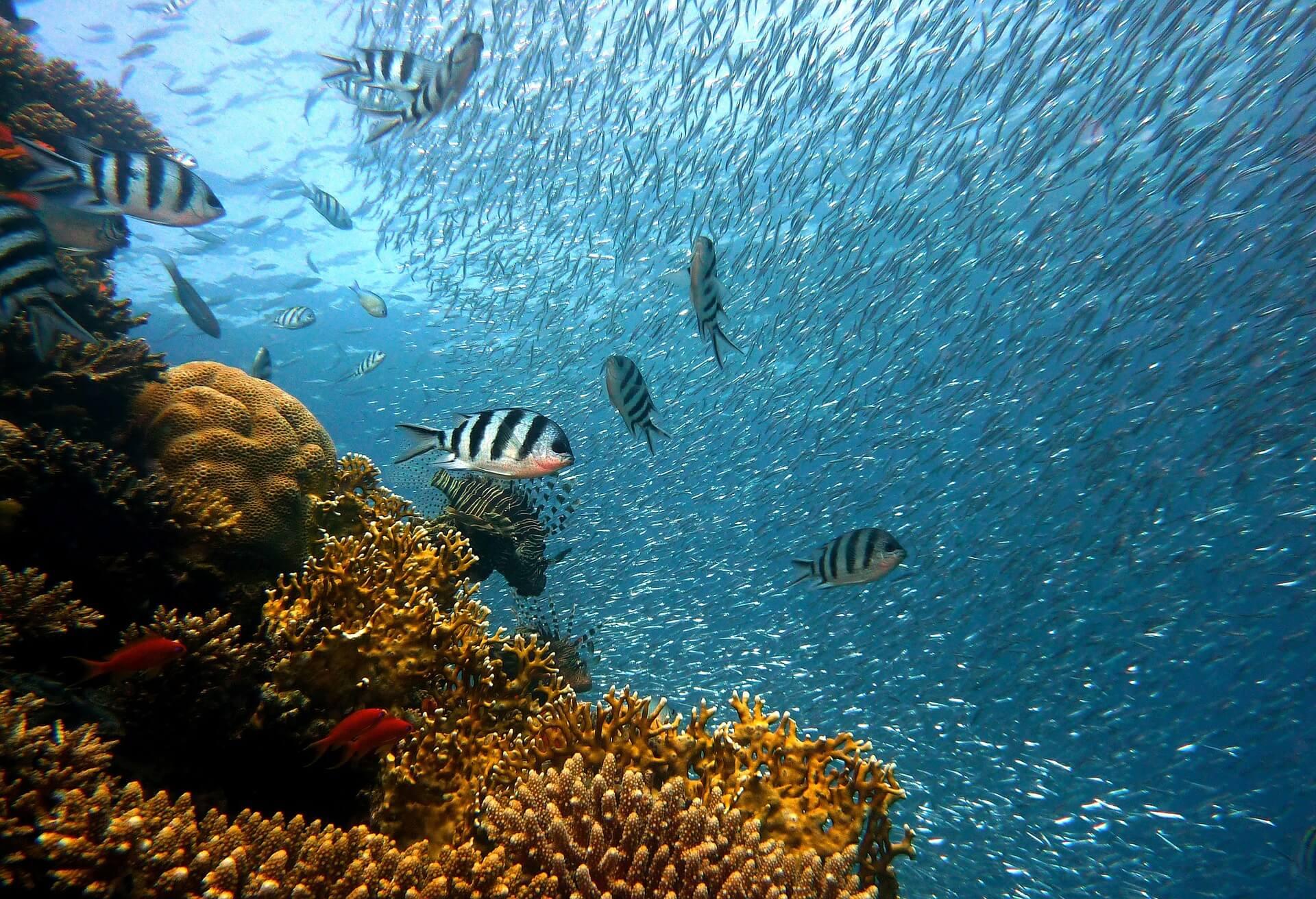 水中でも撮影できる防水ビデオカメラの種類と選び方