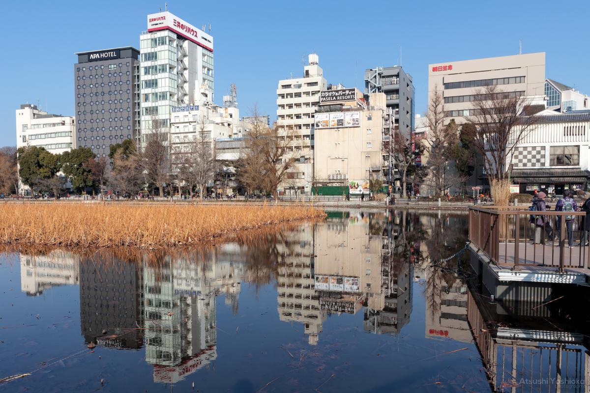 上野恩賜公園 不忍池