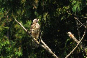R-LIVE 鳥の鳴き声
