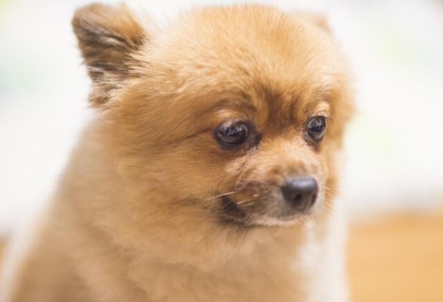 犬とルンバの悲しい事故を防ぐための注意点
