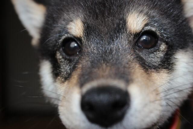 犬のいる家庭でルンバを使うメリット