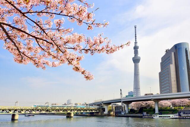 桜撮影 スカイツリー