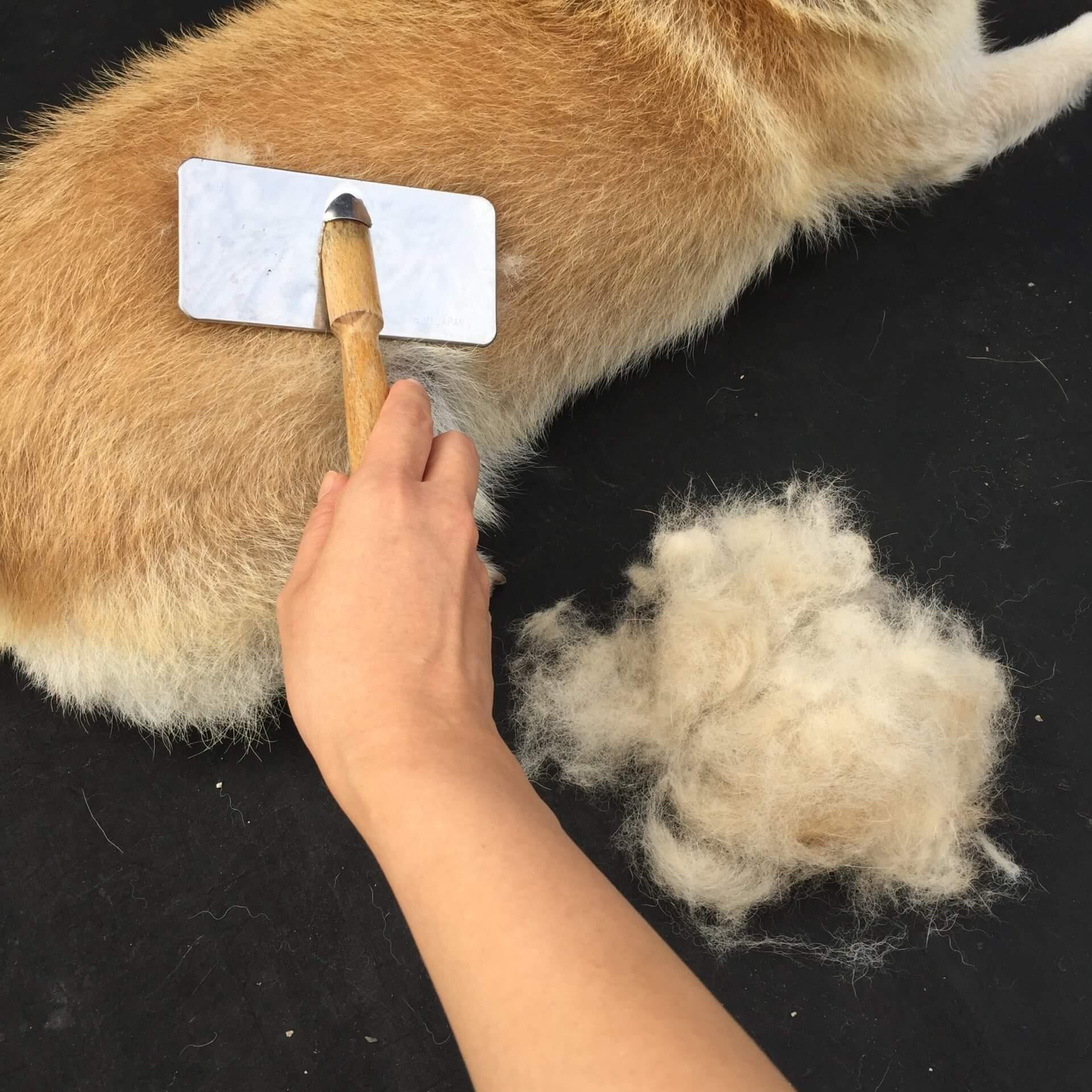 犬のいる家庭でルンバを使うメリット 犬の抜け毛やお散歩の砂まで自動的にきれいになる