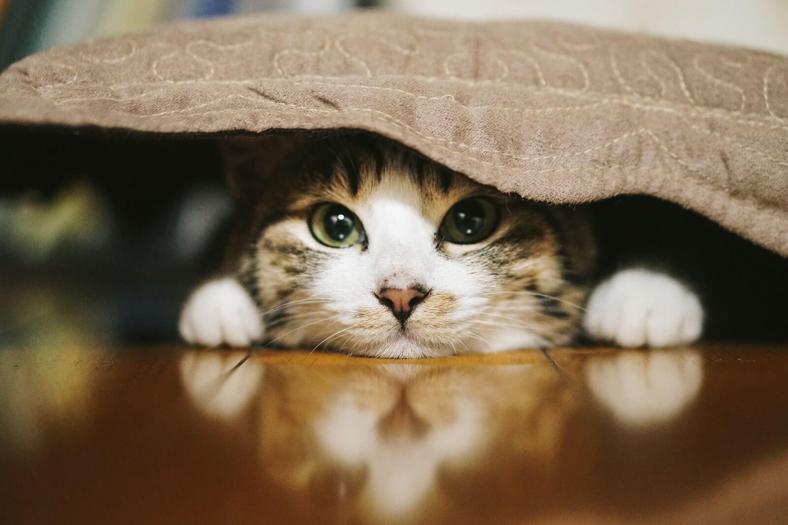 「猫がいてもルンバは使える?」猫飼いさんが不安なこと