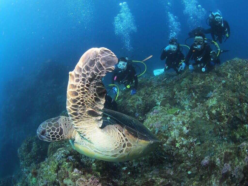 ダイビングに最適な水中カメラの選び方と予算別おすすめ6選!防水カメラ,GoPro,360度カメラ,どれを選ぶ?