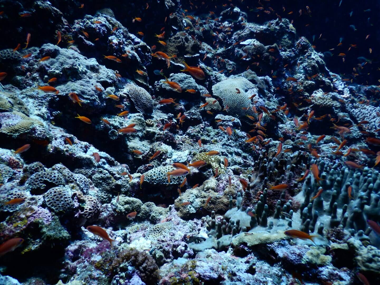 ダイビングに最適な水中カメラの選び方 浅瀬~深い場所まで対応する青かぶり補正性能