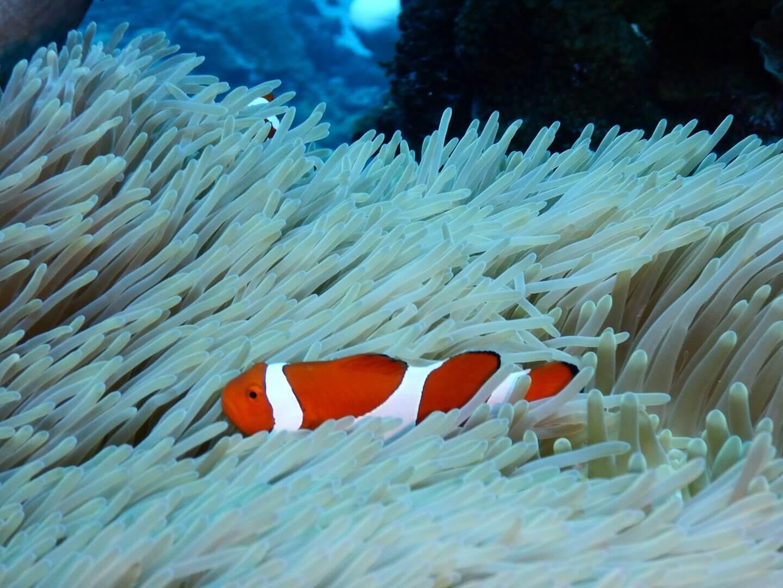 ダイビングに最適な水中カメラの選び方 マクロ派には重要!顕微鏡/マクロモードの性能