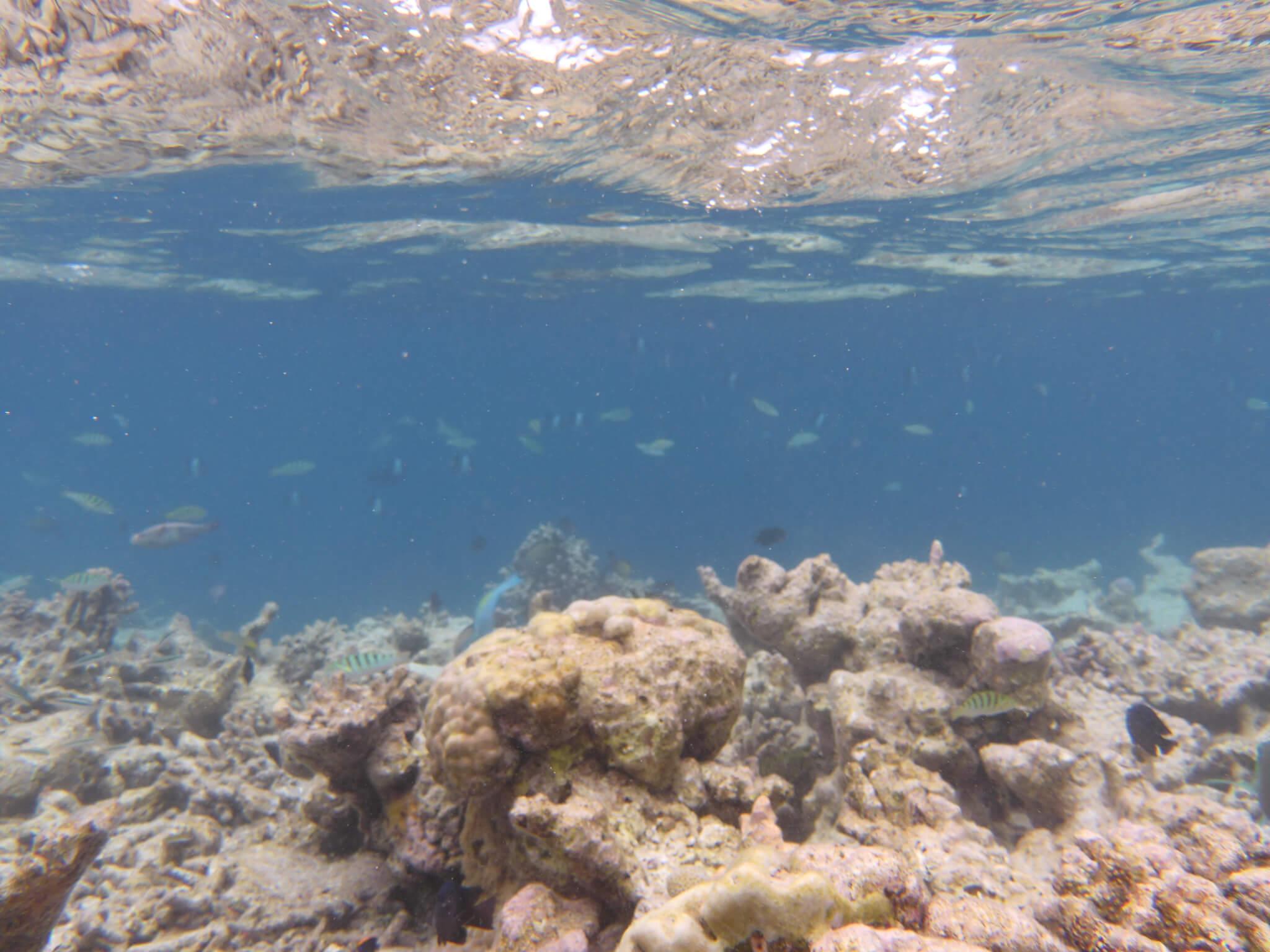 予算別ダイビングにおすすめの水中カメラ6選