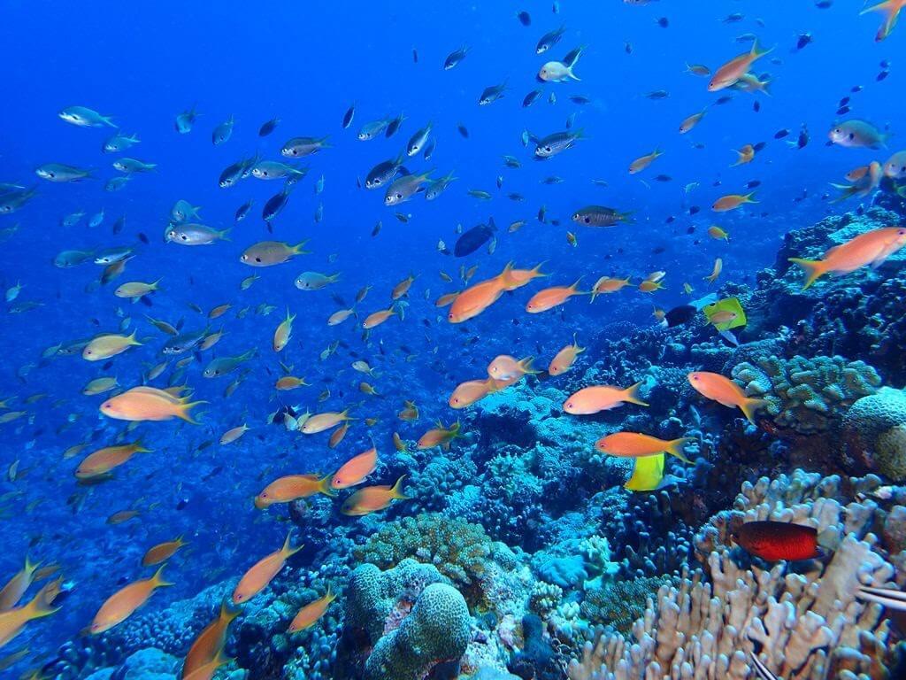 ダイビングに最適な水中カメラの選び方