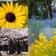 花 撮影ガイド