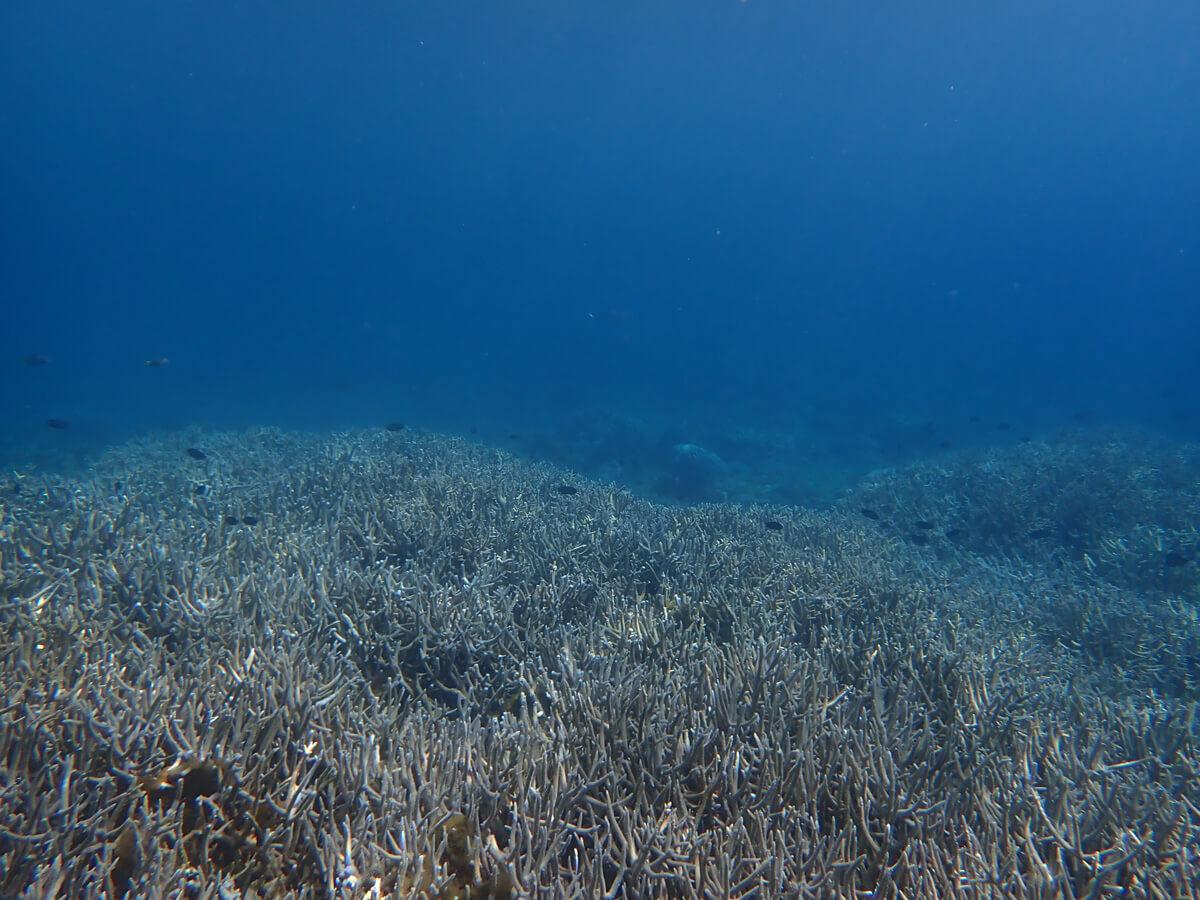 小笠原父島でおすすめのシュノーケリング・海水浴スポット 3. 製氷海岸