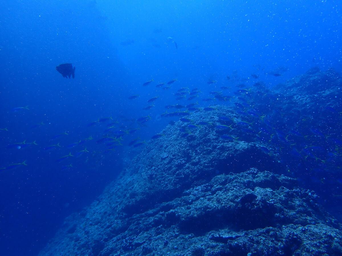小笠原でおすすめのダイビングスポット 1. ドブ磯