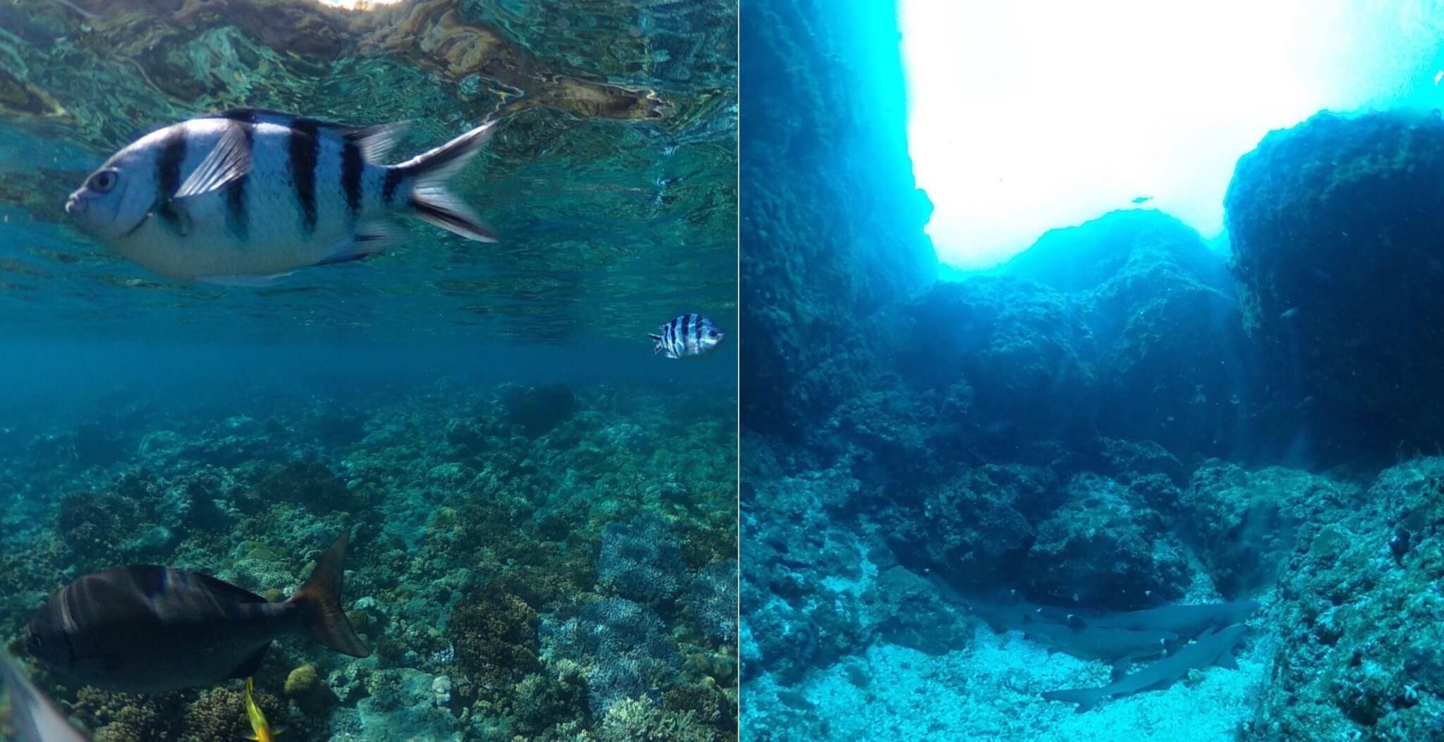 THETAの水中撮影を実際に試してわかった注意点やコツ青かぶり補正はない