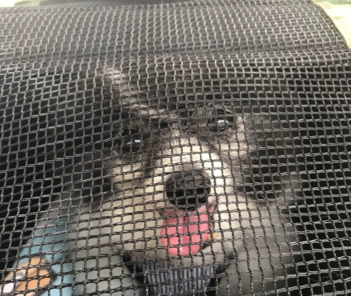 小型犬用ペットカートの失敗しない選び方のポイント 2. キャリー内の快適さ