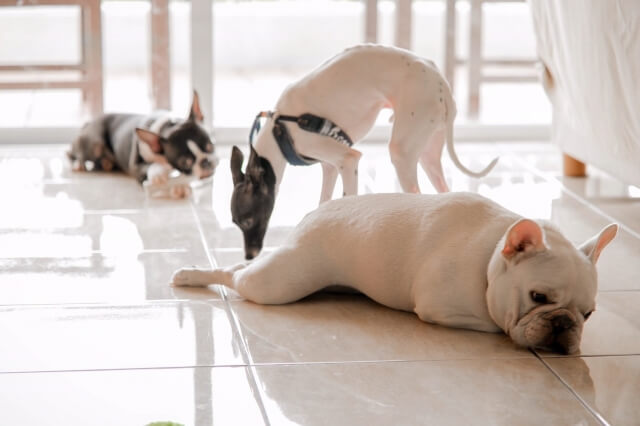 中型犬用ペットカートの失敗しない選び方のポイント 1. 愛犬のサイズや頭数