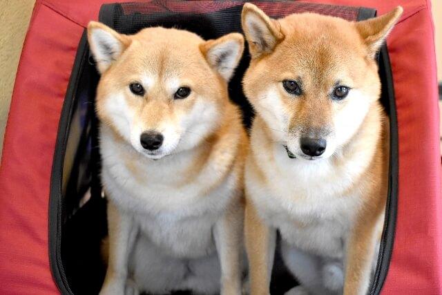 中型犬用ペットカートの失敗しない選び方のポイント 2. キャリー内の快適さ