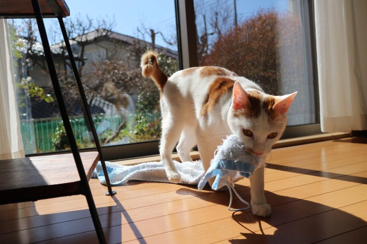 Catlogのある生活を体験!猫様の行動を見守ってみた Catlogを装着!本猫は気にしていない様子