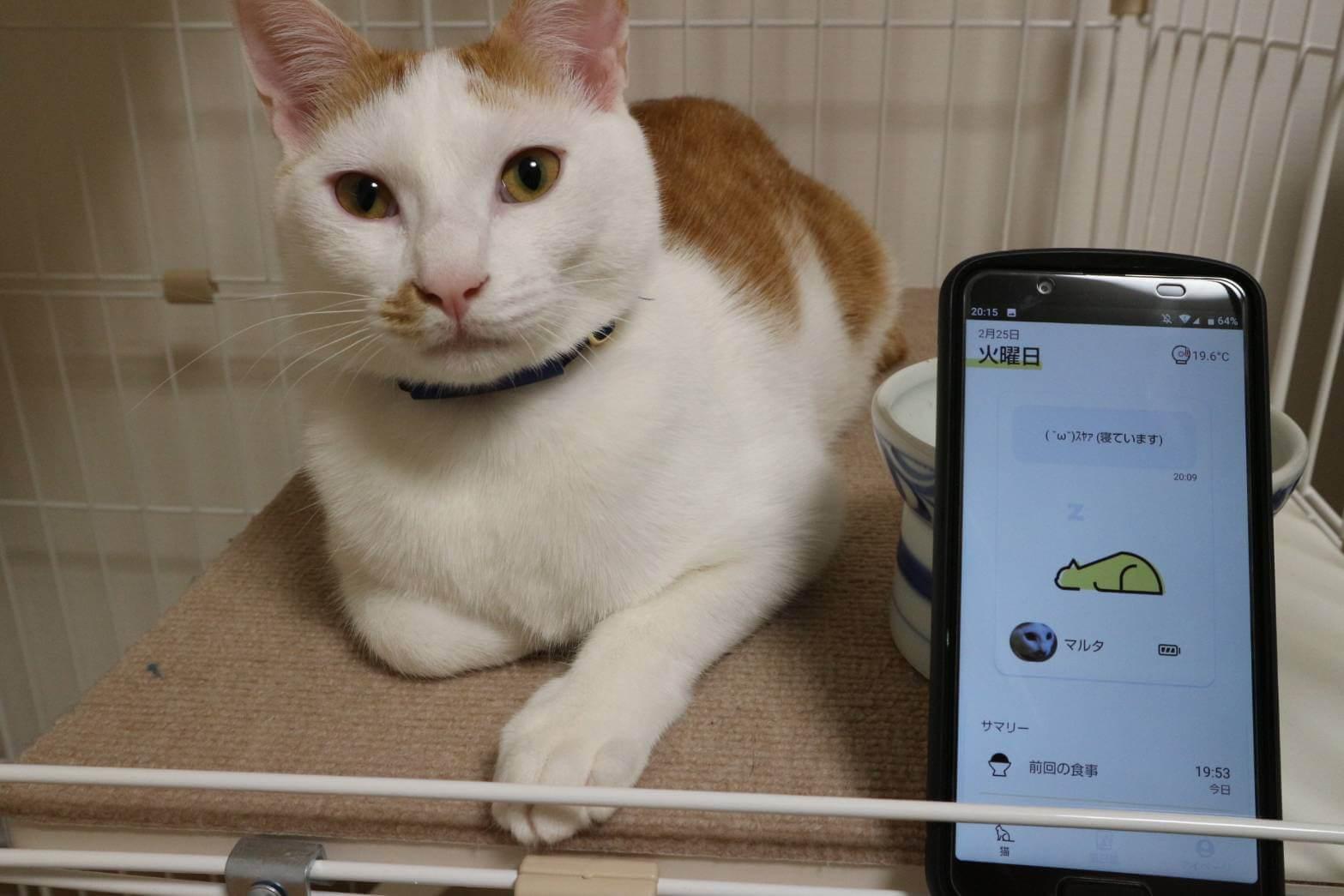 Catlogのある生活を体験!猫様の行動を見守ってみた 実際のCatlogアプリ画面 「現在の状態」にはタイムラグがある
