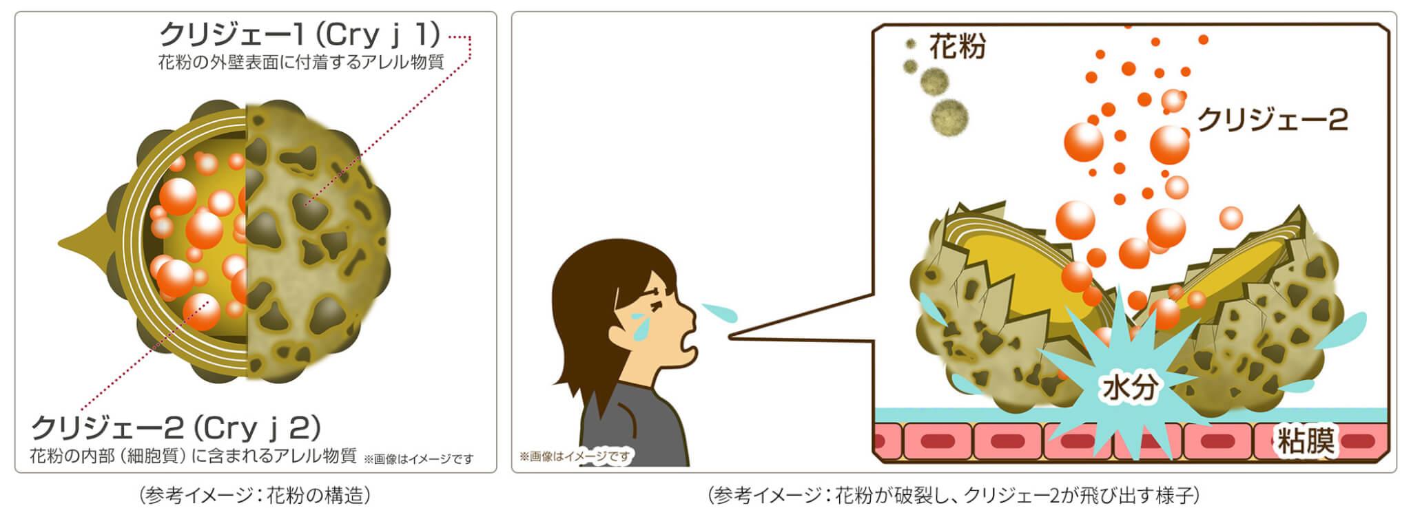 LG stylerの「花粉ケア」コース