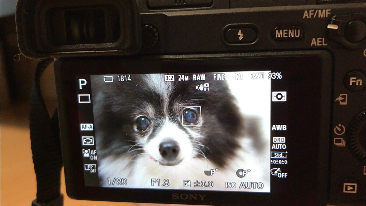 素人こそカメラに頼ろう!スマホより一眼がおすすめな理由とは? オートフォーカスでピントが合いやすい