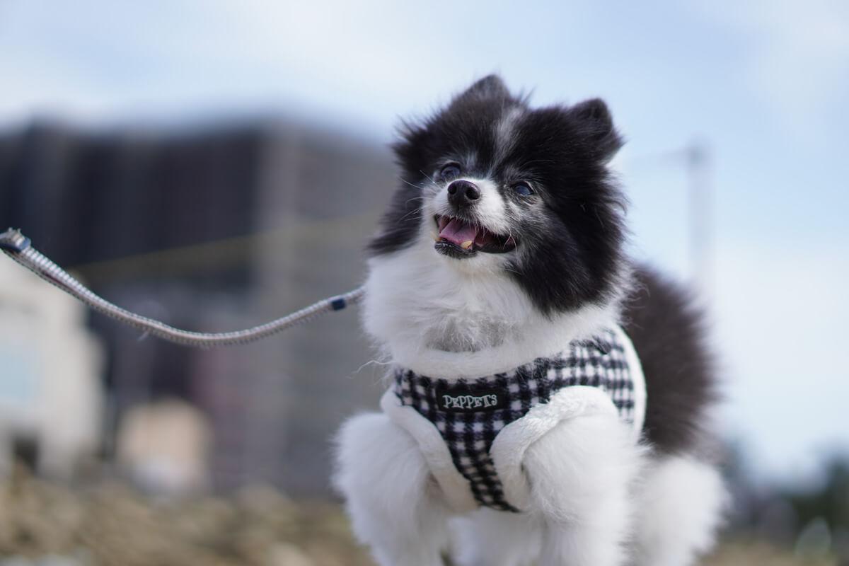 世界一可愛い愛犬の写真を撮影するためのテクニック 基本の撮影スタイルは愛犬目線で
