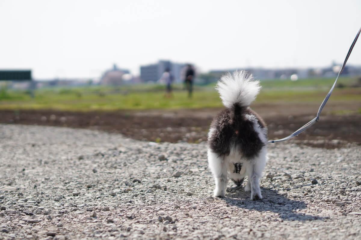 世界一可愛い愛犬の写真を撮影するためのテクニック おやつやオモチャは程々に使おう