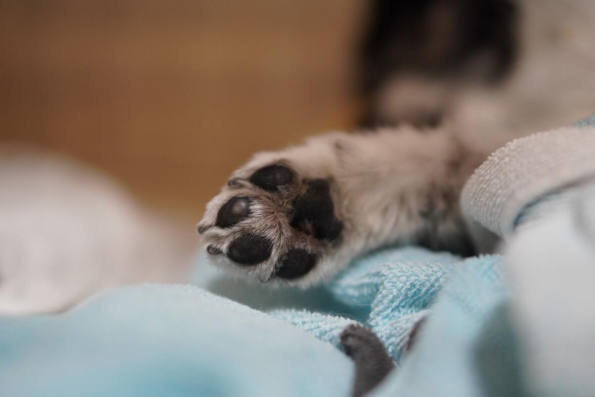 世界一可愛い愛犬の写真を撮影するためのテクニック パーツに寄るのもかわいい