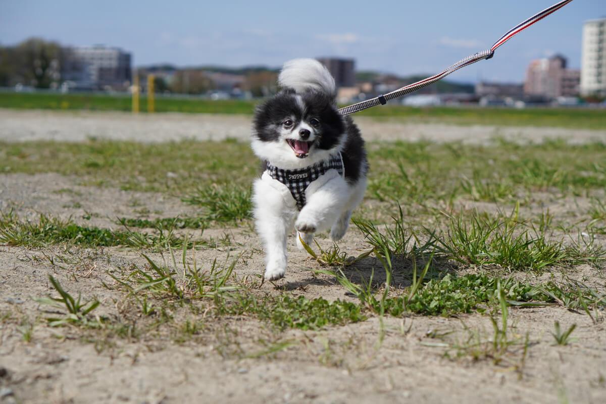 世界一可愛い愛犬の写真を撮影するためのテクニック 高速連写で「飛行犬」にもチャレンジ