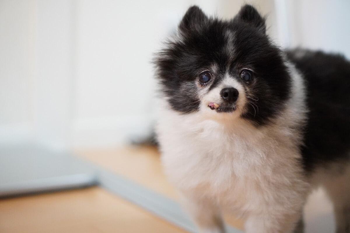 愛犬は使ってくれる?ペット冷暖プレート徹底検証 冷暖プレートと仲良くなろう計画