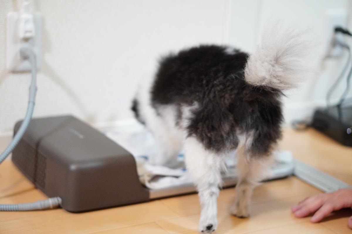 愛犬は使ってくれる?ペット冷暖プレート徹底検証 冷暖プレートと仲良くなろう計画 タオル作戦、発動!!