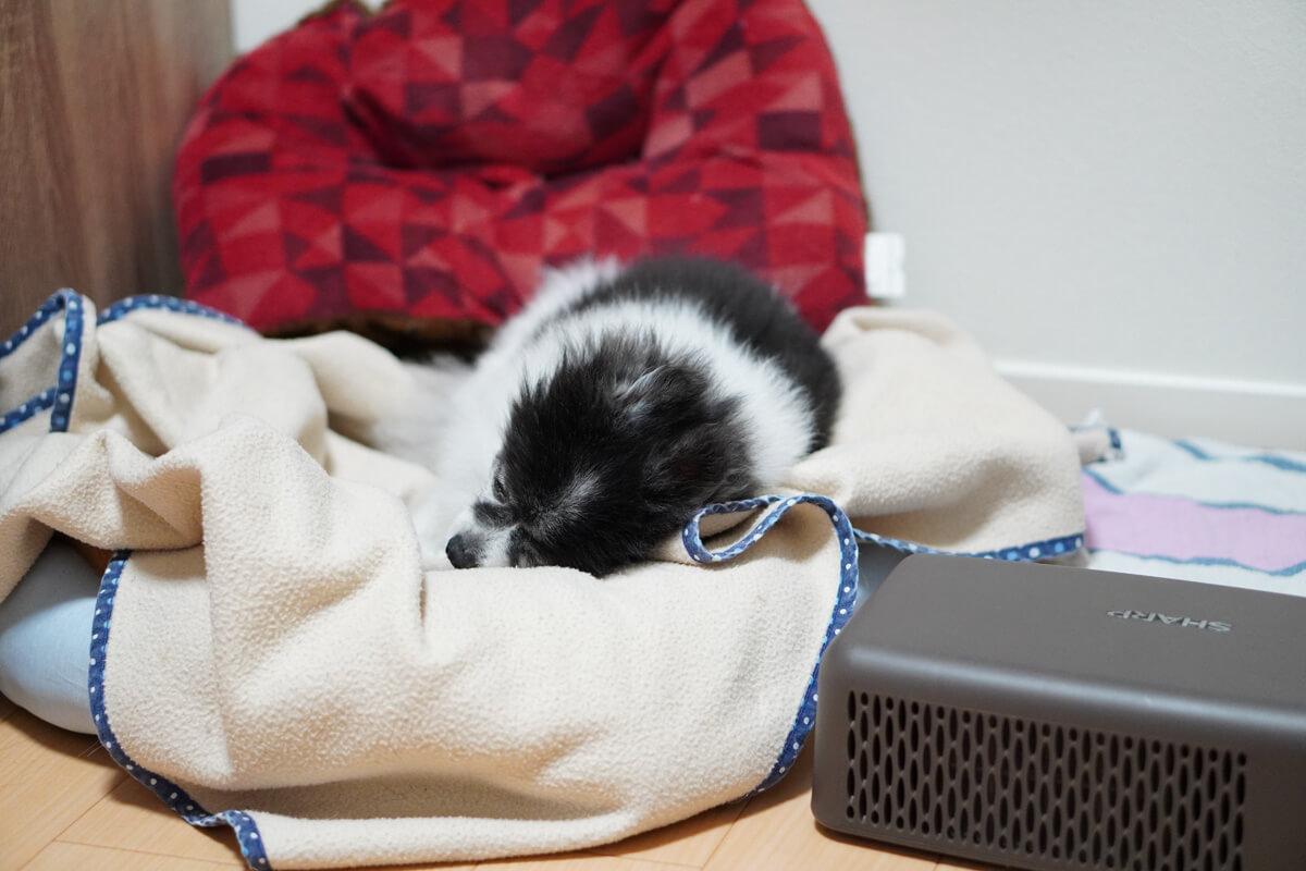 愛犬は使ってくれる?ペット冷暖プレート徹底検証 冷暖プレートと仲良くなろう計画 寝床作戦、発動!!!