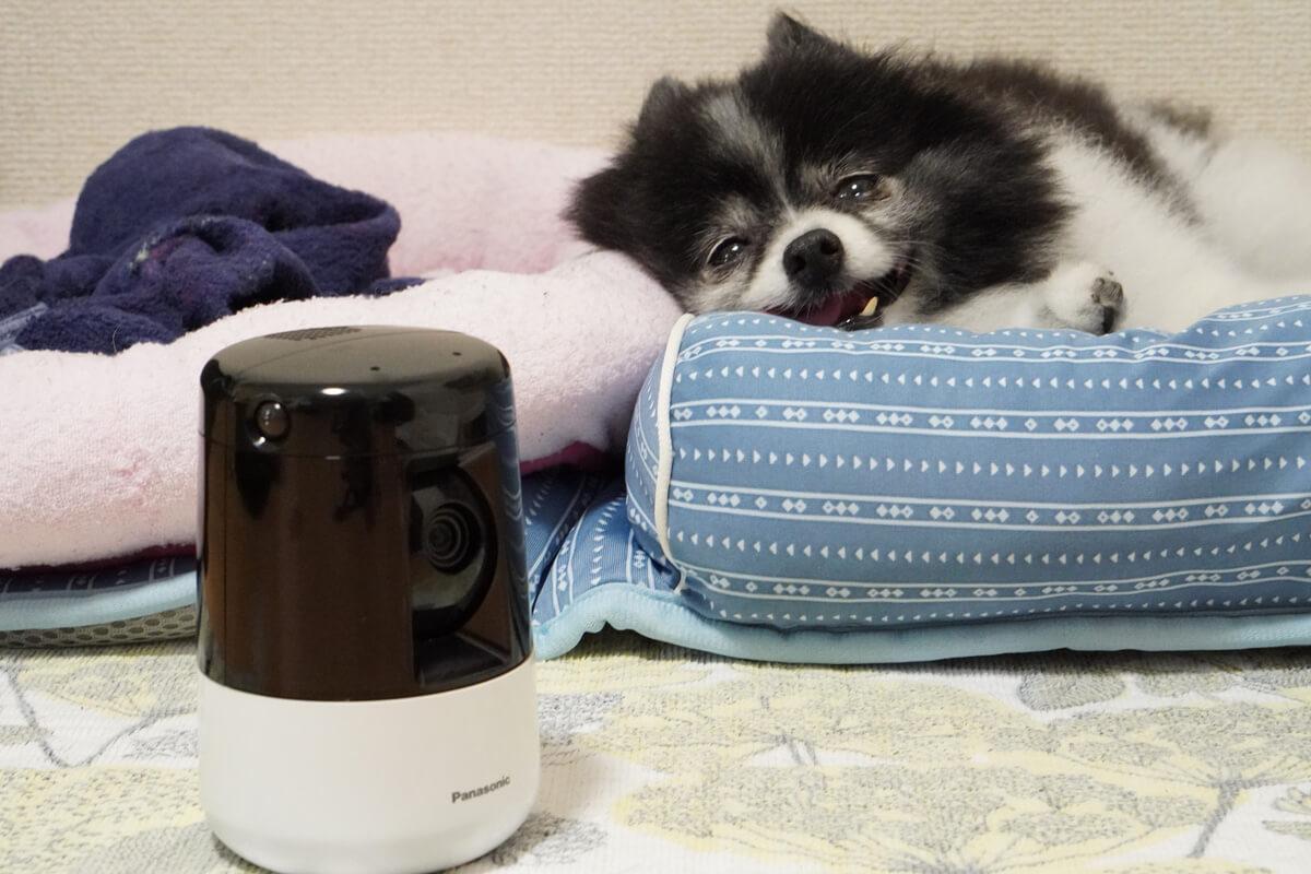 Panasonic HDペットカメラで愛犬を見守った感想