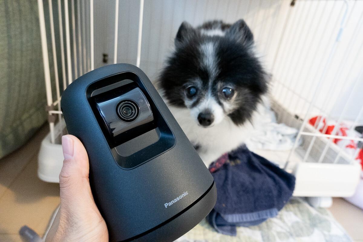 HDペットカメラ KX-HDN215で愛犬を見守った感想